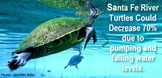 Santa Fe River turtle by Jennifer Adler; addidional copy reads Santa Re River turtles could decrease 70% due to pumping and falling water levels